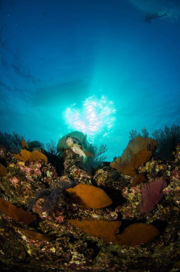Korallenriffe vom Meer von cortez, Mexiko stockfotografie