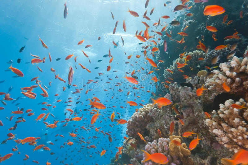 Korallenriffszene lizenzfreies stockbild