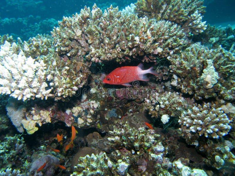 Korallenriffszene stockbild