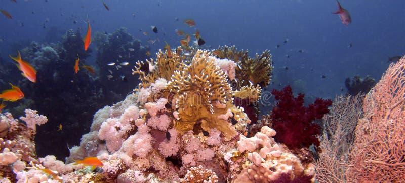 Korallenriffszene stockfoto