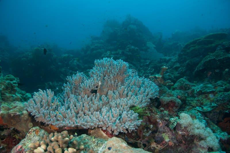 Korallenrote Anordnung stockbilder