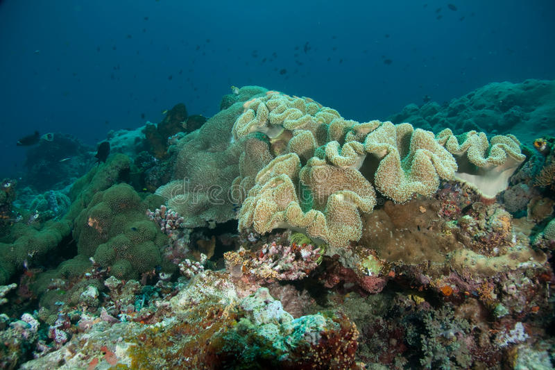 Korallenrote Anordnung stockfotografie