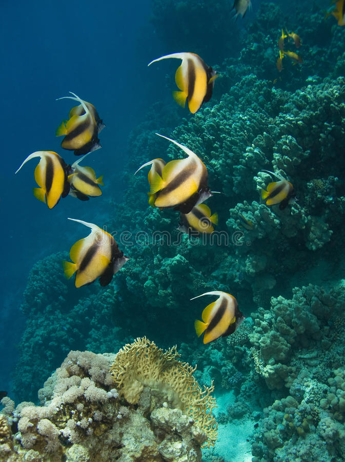 Korallenrote Kolonie stockfoto