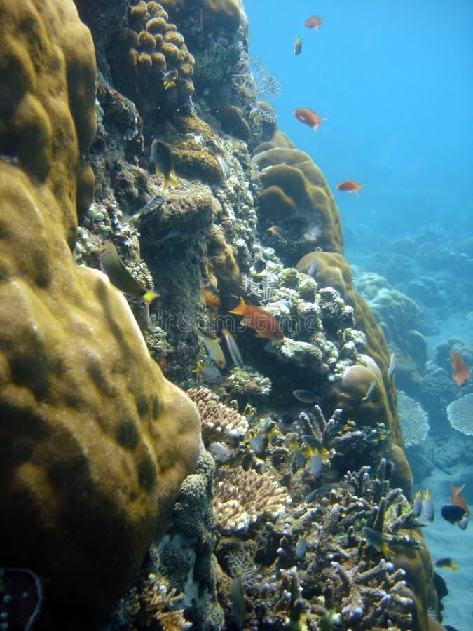 Korallenrote Kolonie- und Korallenfische. lizenzfreie stockfotos