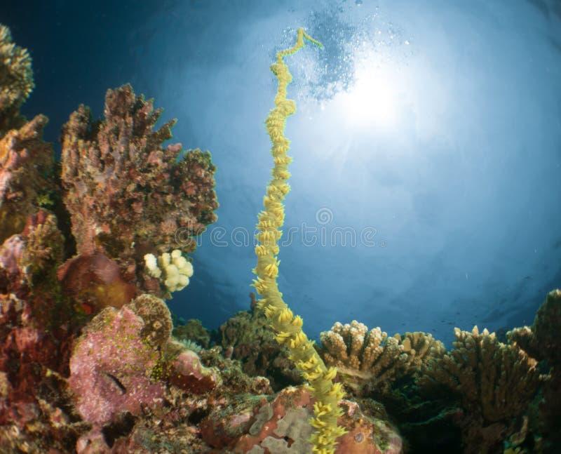 Korallenrote Unterwassermalediven lizenzfreie stockfotografie