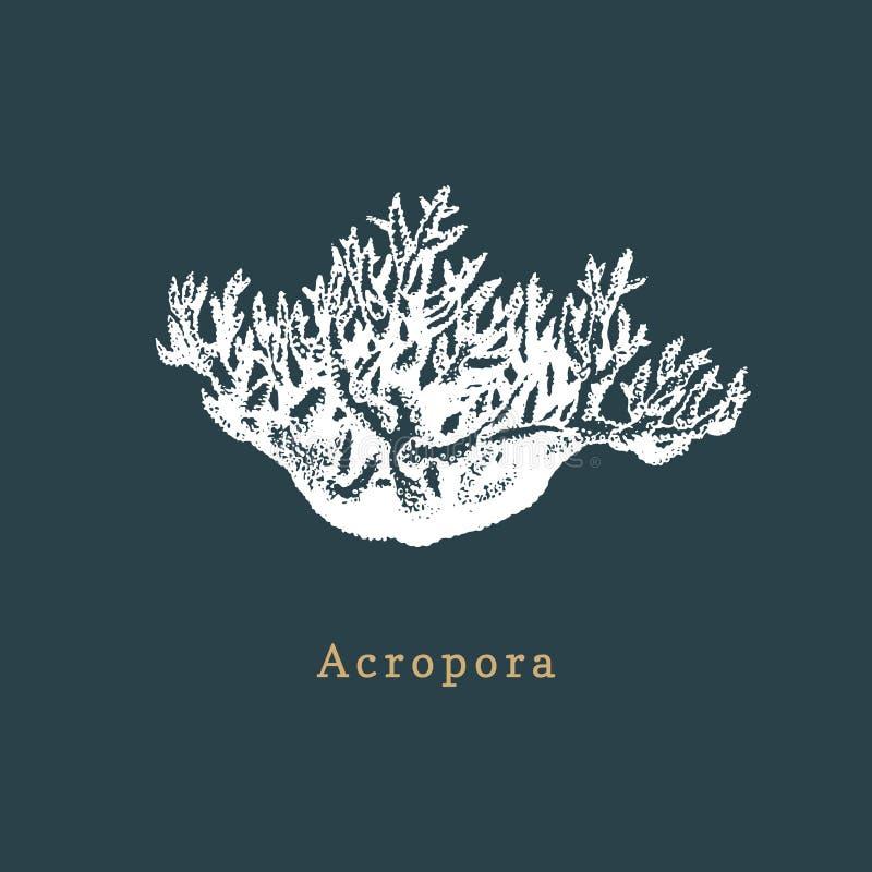 Korallenrote Vektorillustration des Acropora Zeichnung des Seepolypen auf dunklem Hintergrund lizenzfreie abbildung