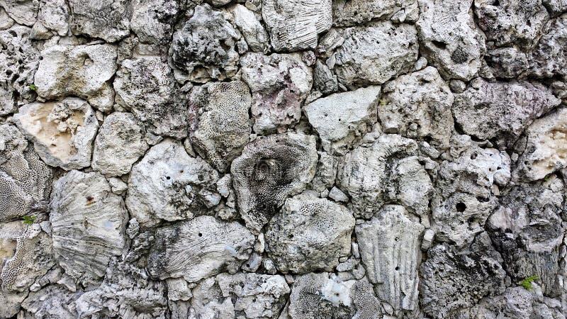 Korallenrote Wand hergestellt von den Blöcken von strukturierten und einzigartigen korallenroten Felsen lizenzfreies stockbild