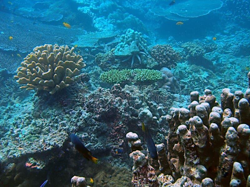 Korallenroter Lebensraum stockfotos