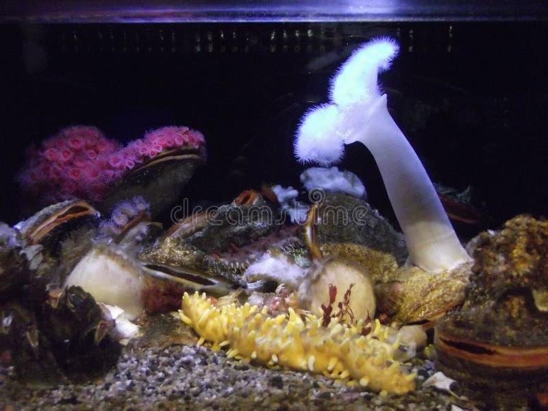 Korallenrotes Aquarium lizenzfreies stockfoto