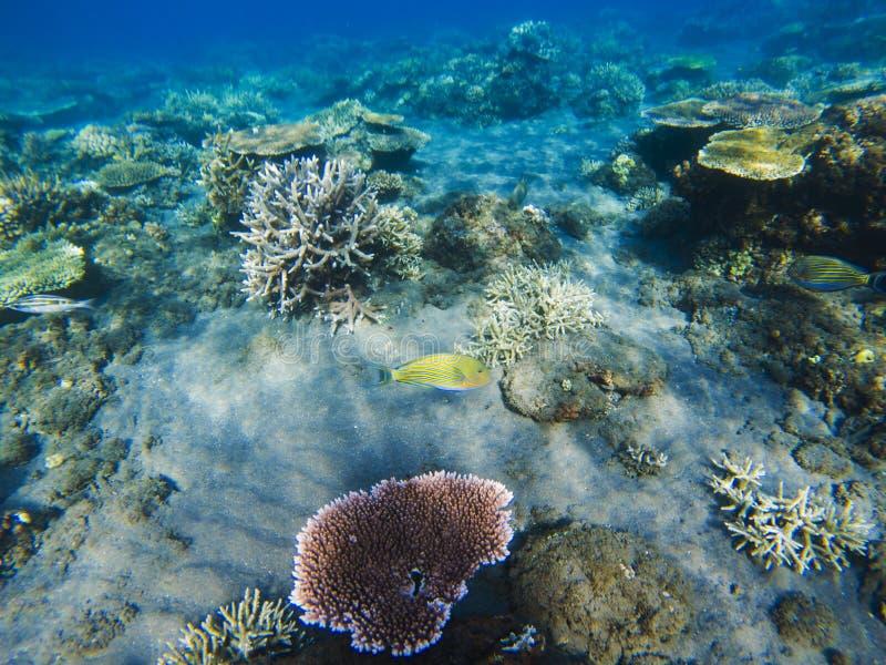 Koraller på sandseabottom Exotiskt snorkla för ökust Undervattens- foto för tropiskt kustlandskap royaltyfri foto