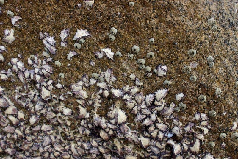 Koraller på vagga fotografering för bildbyråer