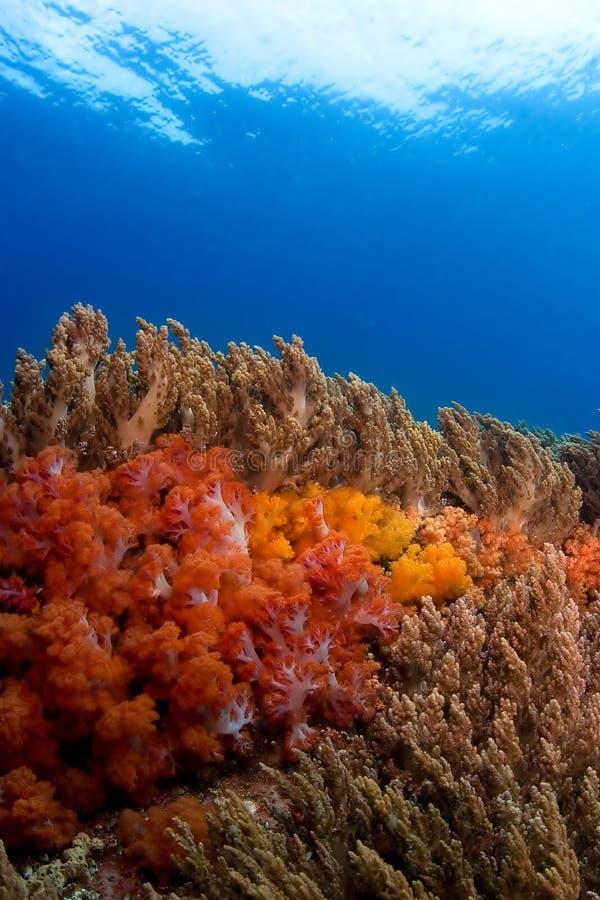 koraller slappa philippines arkivbilder