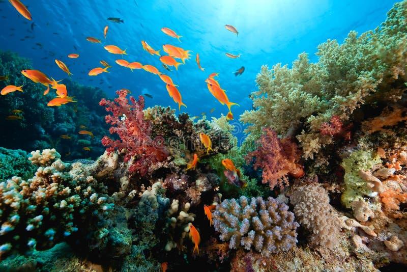 korallfiskhav royaltyfri foto