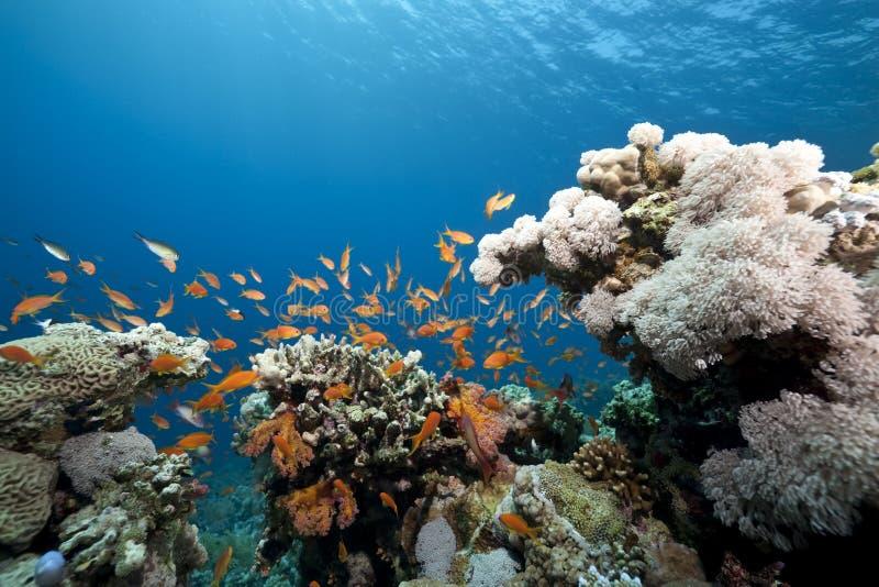 korallhav royaltyfri foto