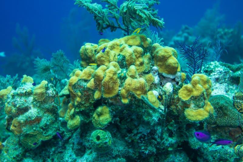 Korallrev med den exotiska fisken i det karibiskt arkivfoto