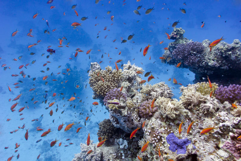 Korallrev med mjuka och hårda koraller på bottnen av det röda havet arkivbild