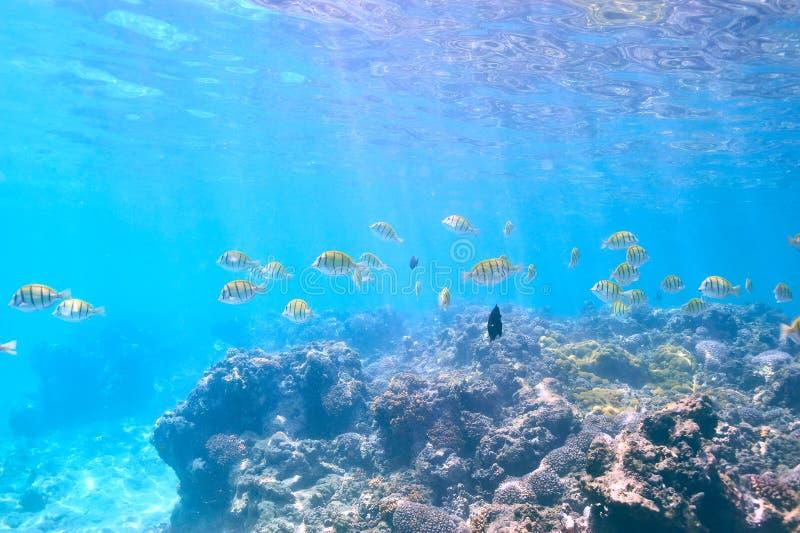 Korallrev och fisk royaltyfri fotografi