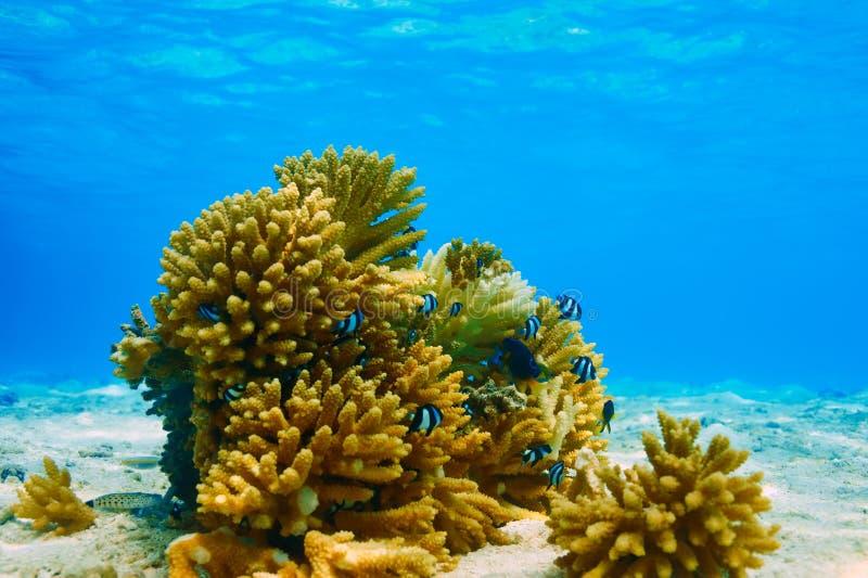 Korallrev på Maldiverna royaltyfria bilder