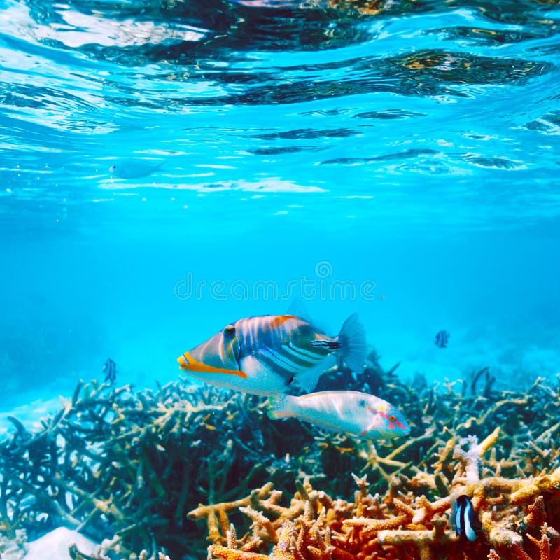 Korallrev på Maldiverna royaltyfria foton