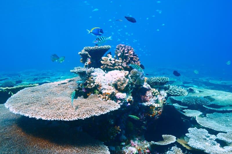 Korallrev på Maldiverna royaltyfri fotografi
