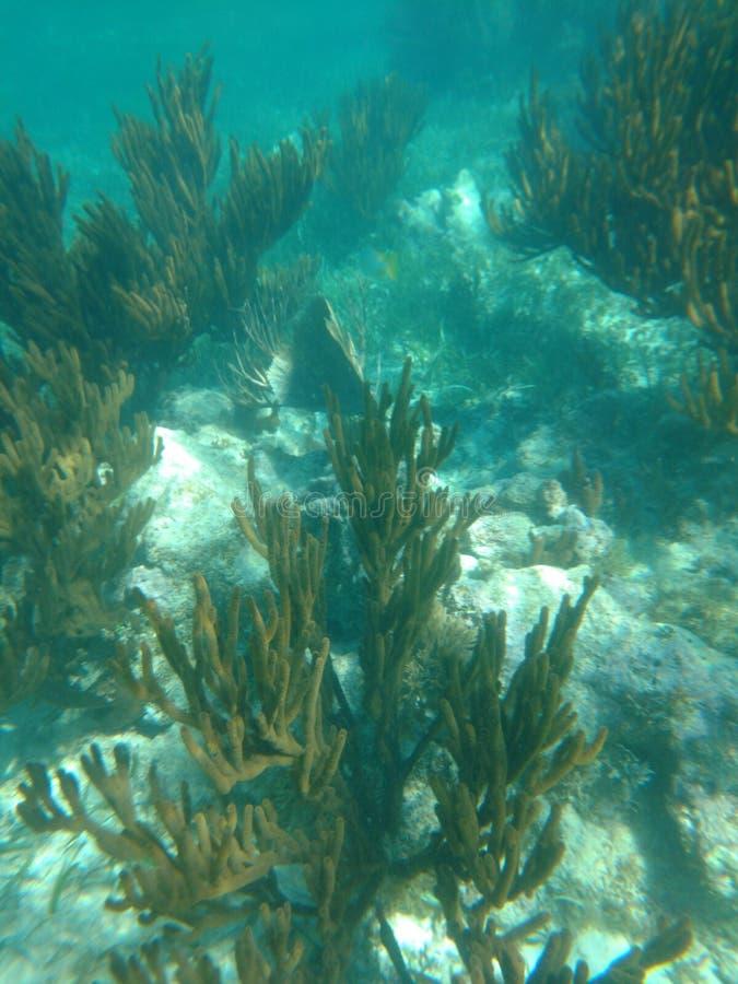 Korallrev Puerto Morelos Mexico arkivbild