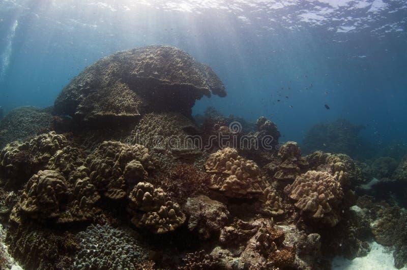 korallrev thailand royaltyfri fotografi