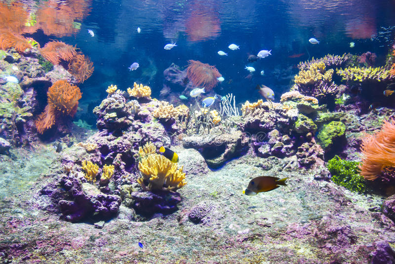 Korallrev under vatten royaltyfri fotografi