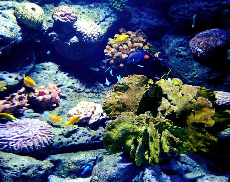 Korallreven inom ett hav är en skatt arkivfoton