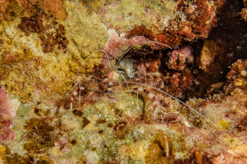 Korallrever och vattenv?xter i R?da havet royaltyfri bild