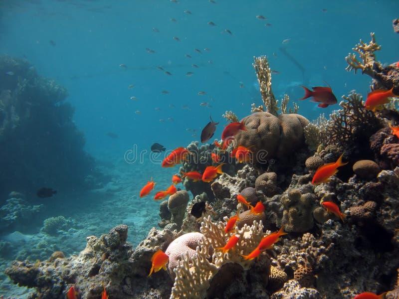 korallrevplats royaltyfri fotografi