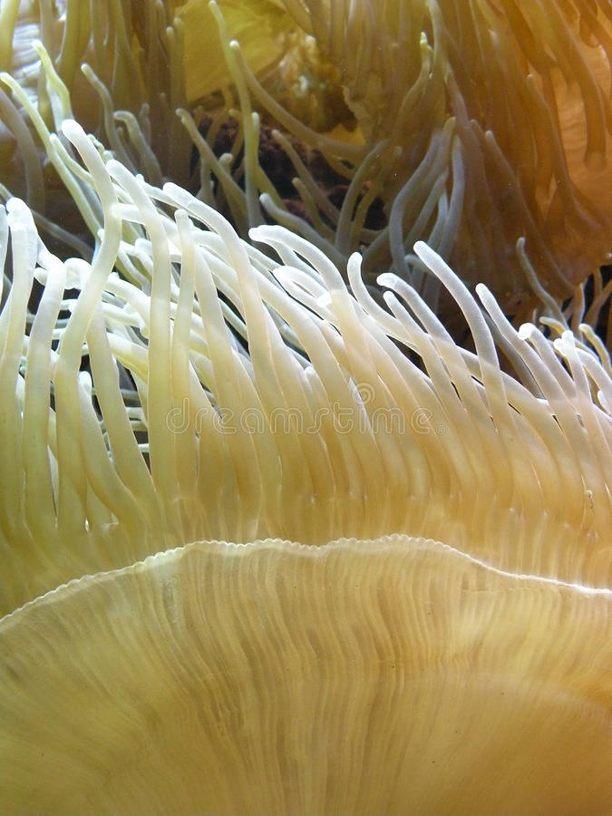 korallrevyellow royaltyfri bild