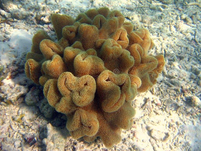 korallsikt arkivfoton