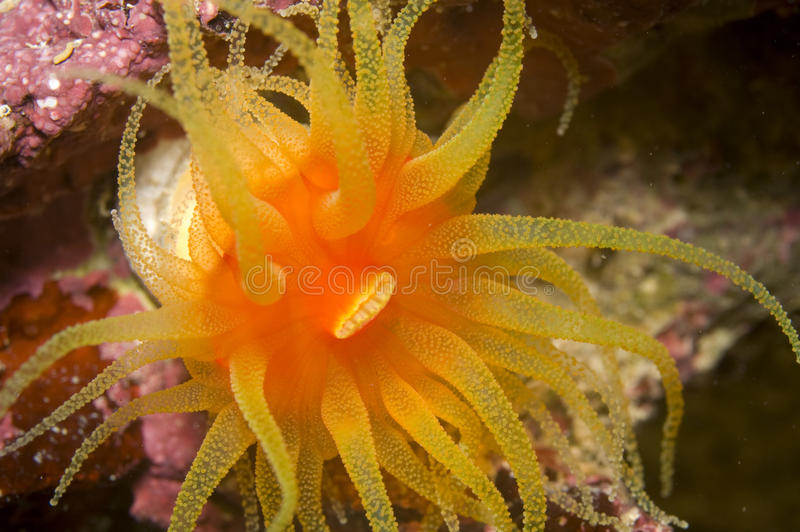 korallsun royaltyfria bilder