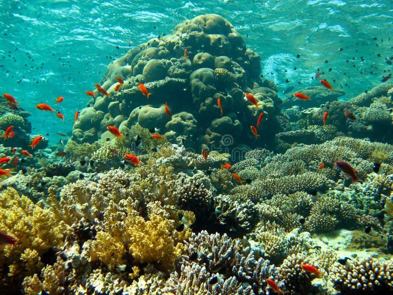 Korallträdgård arkivfoton