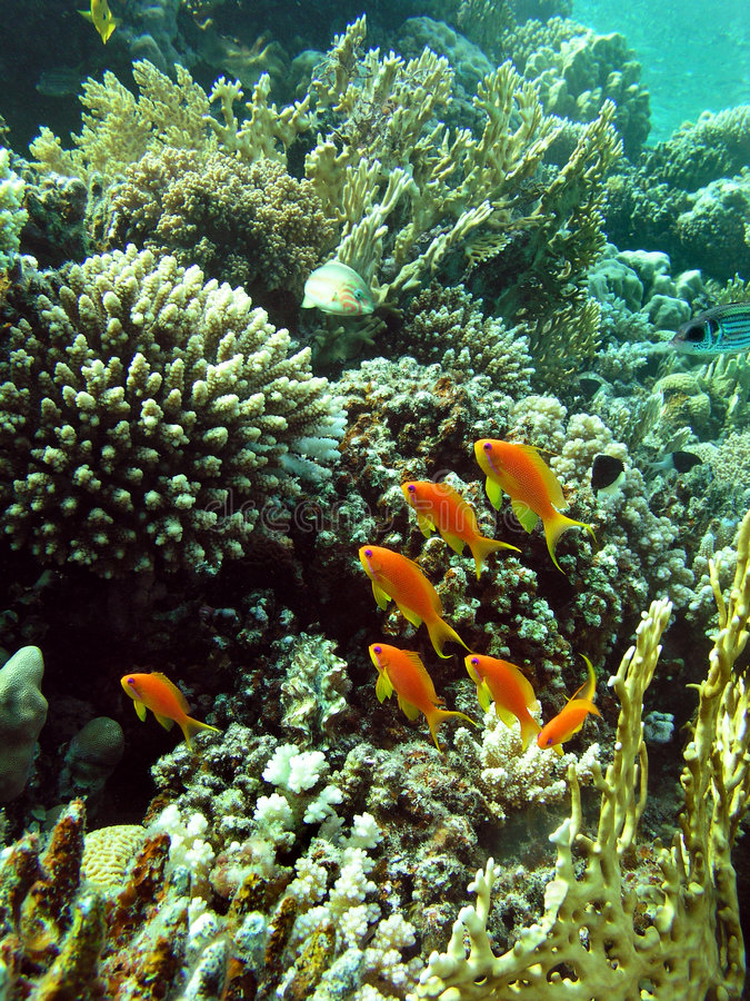 korallträdgård arkivbilder