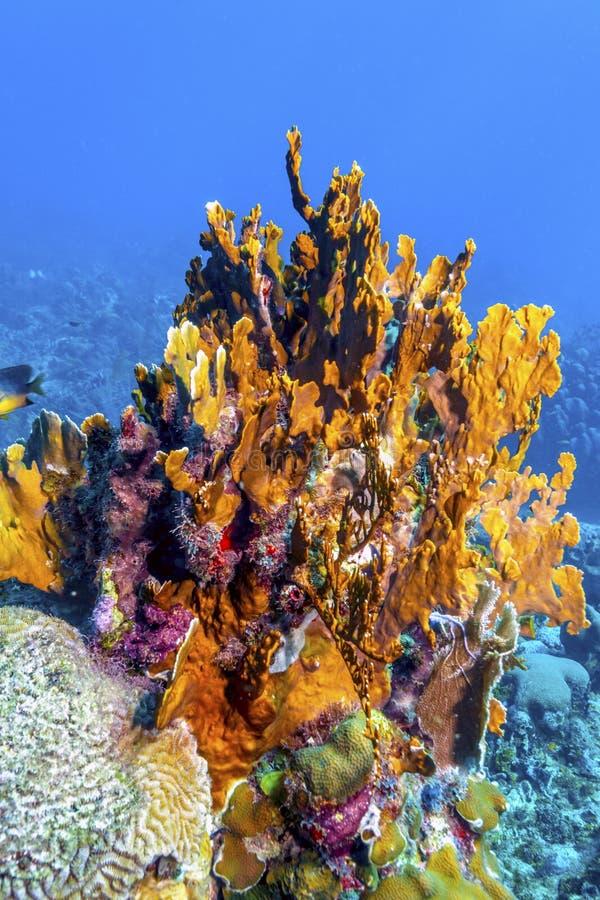 Koralltr?dg?rd i karibiskt arkivfoto
