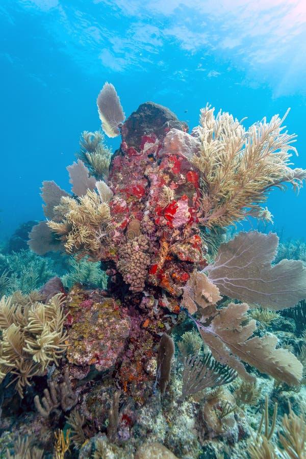 Koralltr?dg?rd i karibiskt fotografering för bildbyråer