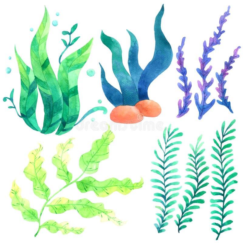 Koralowa akwareli kolekcja odizolowywająca na białym tle, ręka rysująca malował dla kartka z pozdrowieniami, tapeta, pocztówki, ilustracja wektor