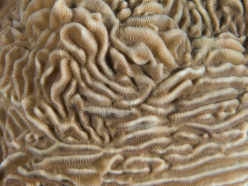 Koralowa tekstura zdjęcia royalty free