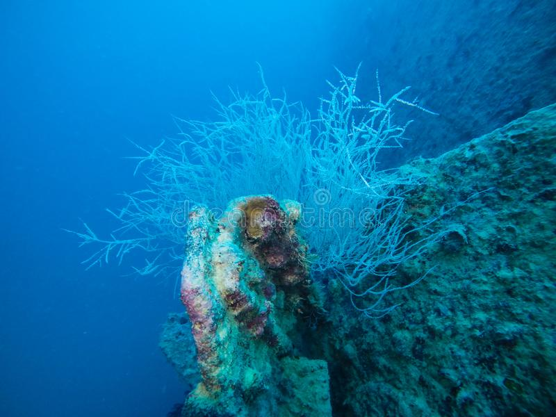 Koralowe rośliny R na Podwodnym statku wraku w Czerwonym morzu, Eg. zdjęcia royalty free