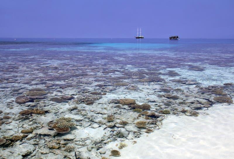Koralowy ogród obrazy royalty free
