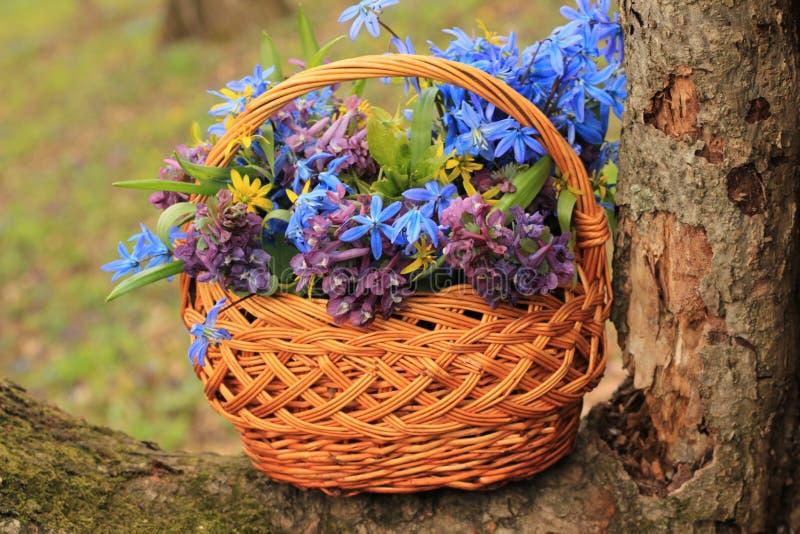 Korb der Blumen im Wald lizenzfreies stockbild
