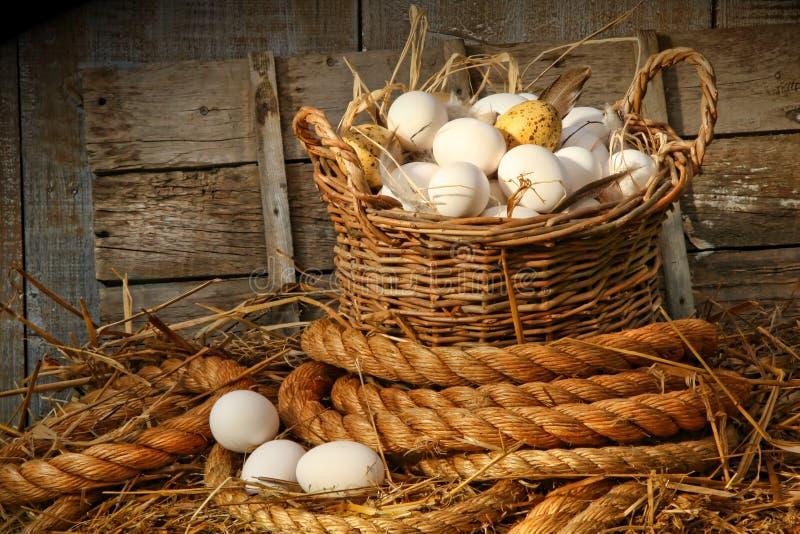 Korb der Eier auf Stroh stockbilder