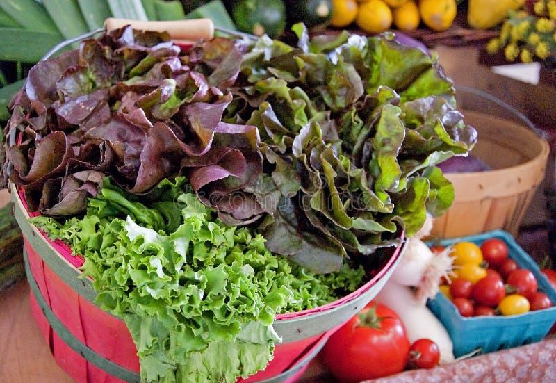 Korb des frischen organischen Kopfsalates stockbilder