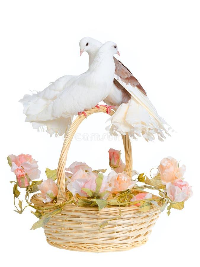 Korb mit dekorativen Tauben stockfotografie