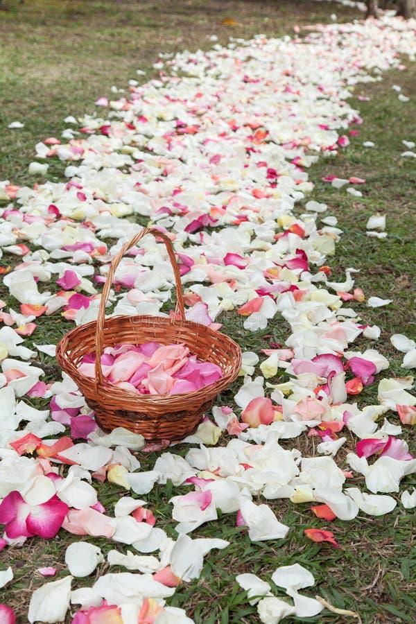 Korb mit den rosafarbenen Blumenblättern in einem Weg von rosafarbenen Blumenblättern lizenzfreies stockfoto