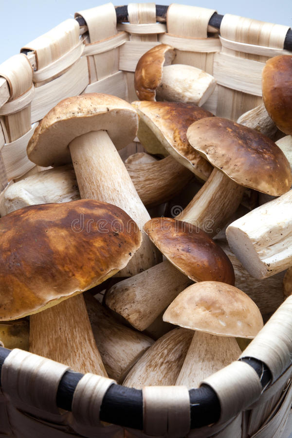 Korb mit eatable Pilzen stockbild