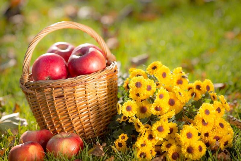 Korb mit roten Äpfeln im Herbst lizenzfreie stockfotografie