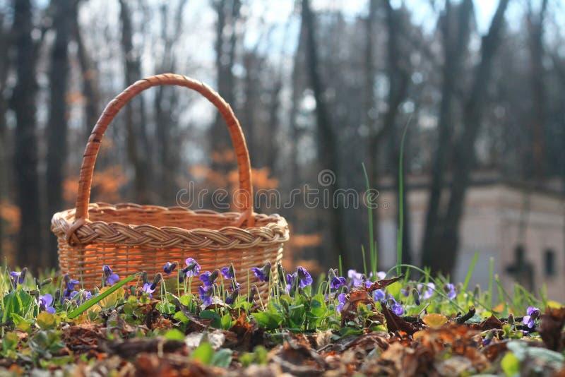 Korb mit Veilchen im Wald stockfotografie