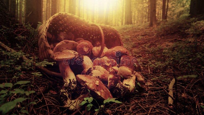 Korb voll der Pilze lizenzfreies stockbild